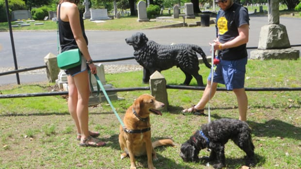 Dogs in cemetery