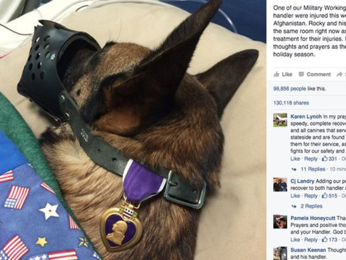 "A photo of canine Rocky recuperating with a purple heart, that was posted Dec. 9, 2015. The photo has gone ""viral,"" receiving more than 89,000 likes in just a few days."
