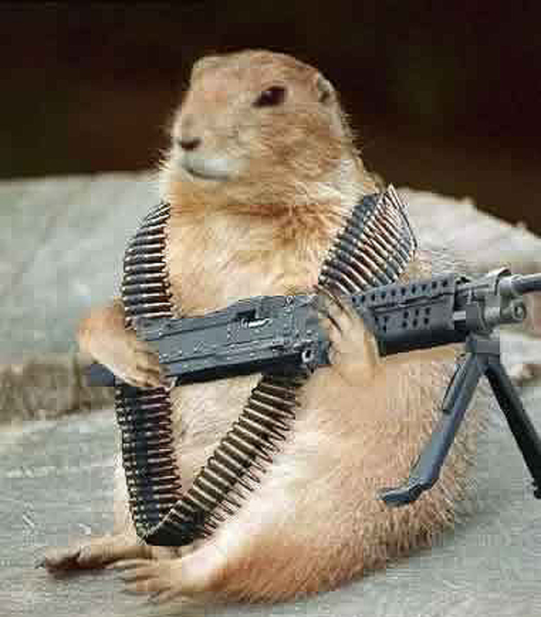 groundhog-gundog