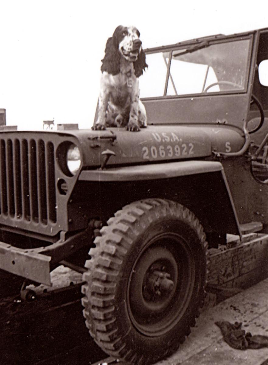 Joe—The Motor Transport mascot. June 1942