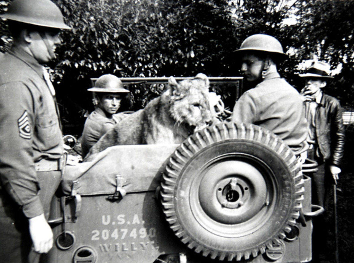 Historic photo of a lion in Willys registration no. 2047490